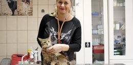 Pomóż zbudować szpital dla kotów