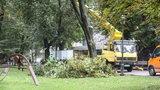 Wycinają drzewa na Plantach w Krakowie