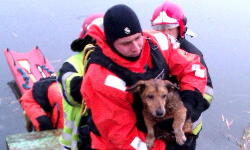 uratowany pies na lodzie