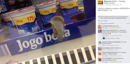 Mysz w lodówce! Biedronka przeprasza