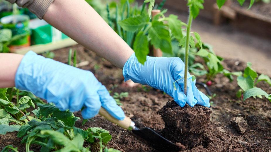 Pięć kroków do ekologicznego ogrodu