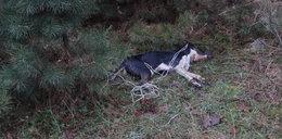 Kto powiesił psa w Aleksandrowie Łódzkim?
