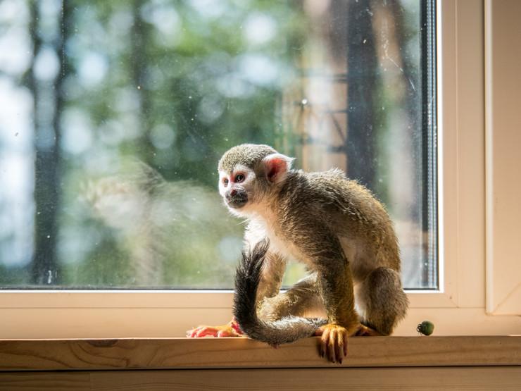 majmun na prozoru foto shutterstock_758676133