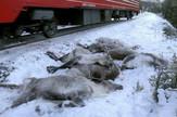 Ubijeni irvasi, Norveška