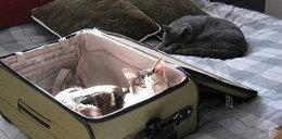 """Weź mnie ze sobą! Tak zwierzęta """"udaremniają"""" właścicielom wyjazd"""