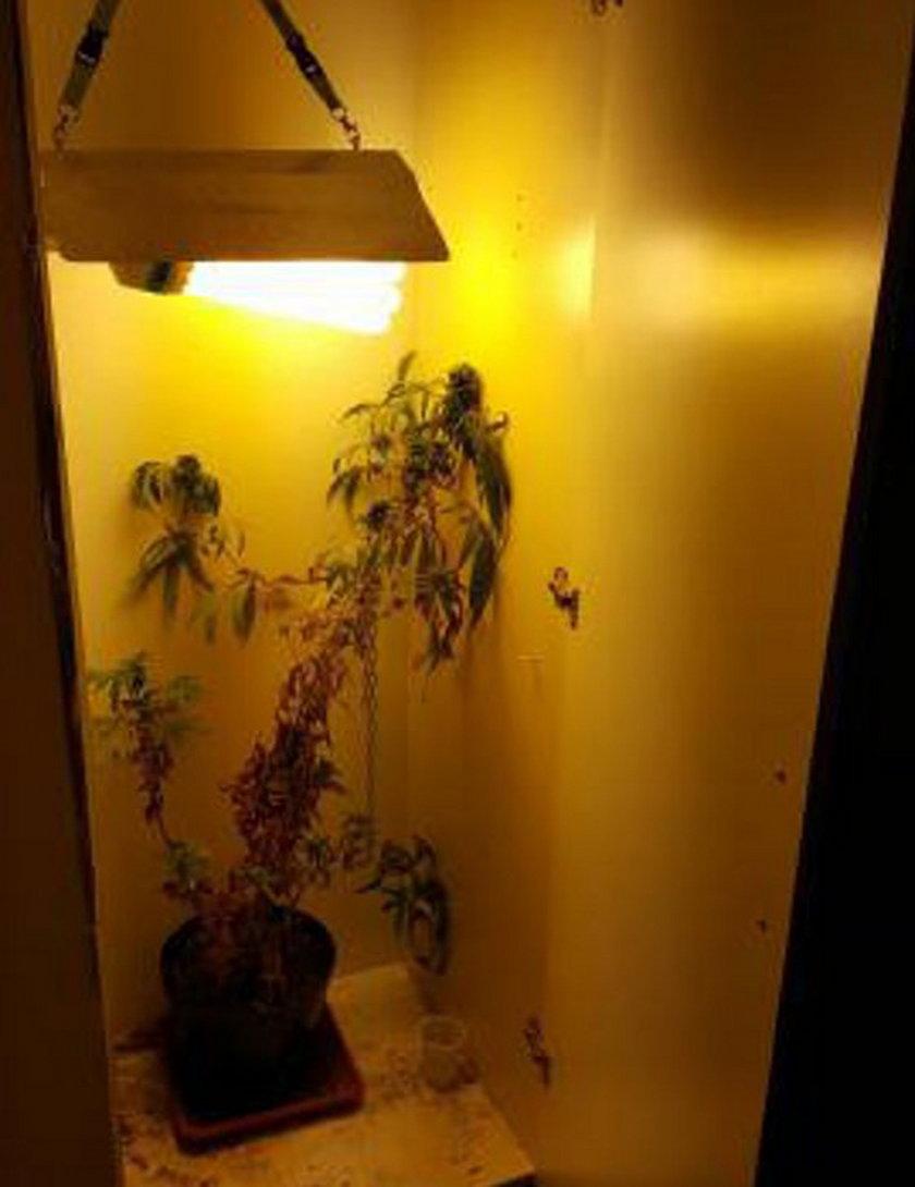 Trzymał marihuanę w szafie