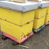 HOĆEMO LI OVE GODINE IMATI MEDA Prošle godine rod je bio desetkovan, a hoće li pčele preživeti ovu zimu zavisi od jednog uslova