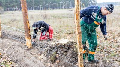 Niemcy budują płot przy granicy z Polską