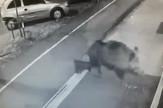Divlja_svinja_napad_NS_drugi_video_vesti_blic_safe