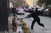 Ubili psa