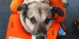 Pies z rozbitka został marynarzem. FOTY