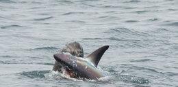 Atak rekina: zasadzka na turystów. Jak uchronić się przed atakiem drapieżnika?