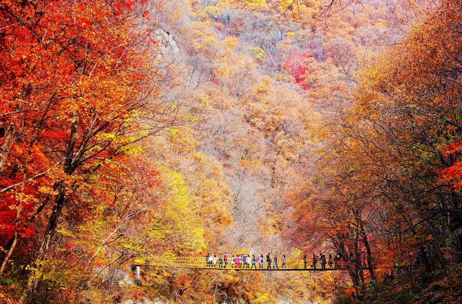 Fall Colors Light Up Liaoning Province China