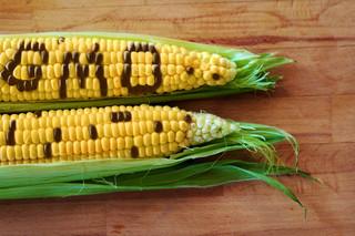 """Oznaczenie """"Wolne od GMO"""" może być kosztownym luksusem"""