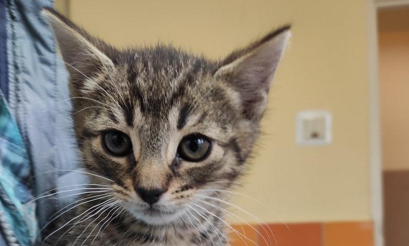 Te urocze kotki szukają domów.
