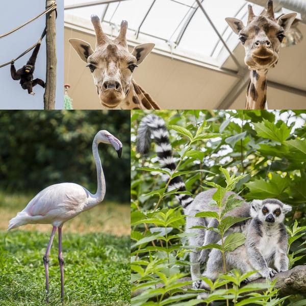 Opolski Ogród Zoologiczny
