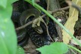 bg zmija