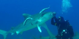 Sposób na rekina? Warto wiedzieć