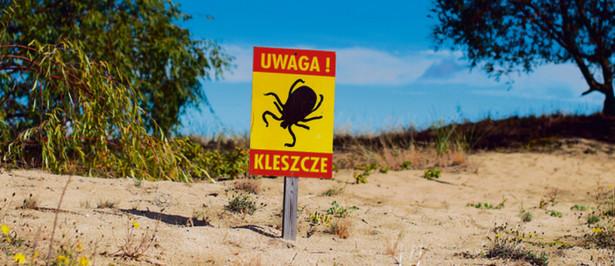 Trzy na dziesięć kleszczy żyjących w Polsce może przenosić groźne choroby
