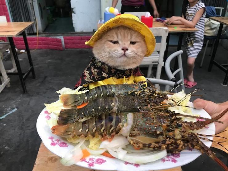 mačak vijetnam riba foto fb