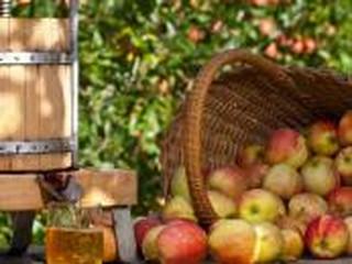 Rosyjskie embargo na jabłka. Fiskus nie oskubie sadowników z pomocy