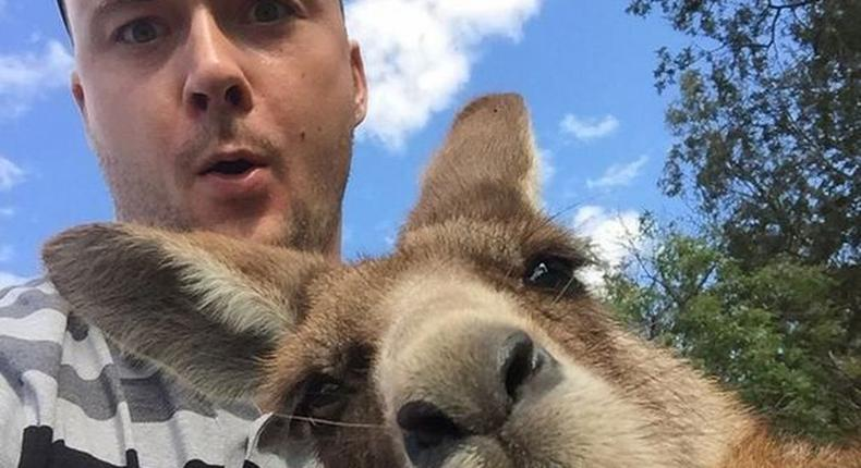 The man has a shocked expression on his face as the Kangaroo leans in for a selfie.