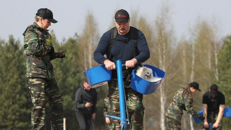 Prezydent Białorusi w akcji