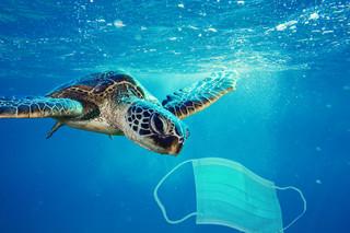 Filipiny: Zużyte maseczki na dnie oceanu, tony medycznych śmieci zanieczyszczają rafy