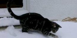 Ten kot kocha śnieg! FILM