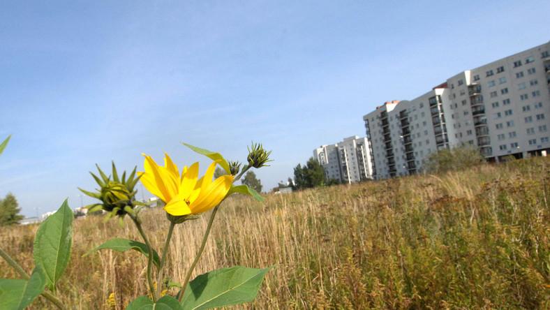 Oto najlepsze grunty w Polsce. Gdzie są te działki?