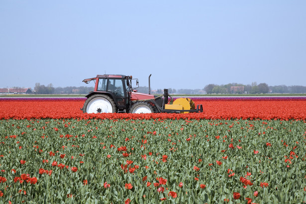 Ok. 1,36 mln rolników stara się o dopłaty bezpośrednie za 2012 r.