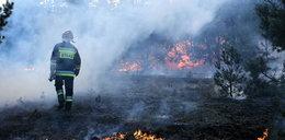 Pożar lasu w Bydgoszczy! Sytuacja jest dynamiczna
