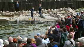 Fokarium w Helu wielką atrakcją - pół miliona turystów rocznie ogląda i uczy się o fokach