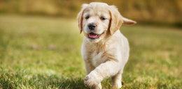 Liczysz w ten sposób wiek swojego psa? Popełniasz błąd!