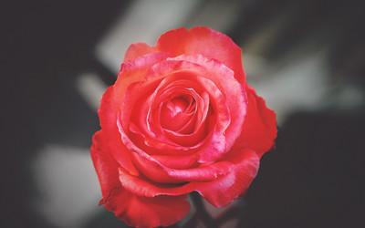 Symbolika Kwiatów Mak Goździki Biała Róża I Inne