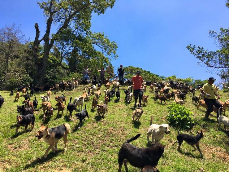 zemlja pasa lutalica02 foto FacebookTerritorio de Zaguates Oficial