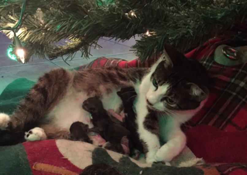 Mačka Tink pripravila pre svojich majiteľov poriadne vianočné prekvapenie.  Foto  Twitter WeTheDanielle 01e63b1d422