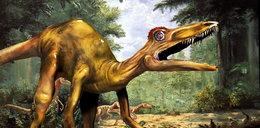 Odkryli jaja dinozaurów. To przełom!