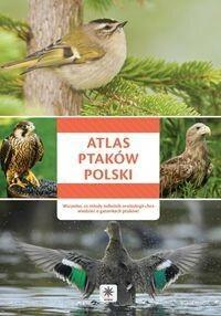 Dragon Atlas ptaków Polski - Wszystko, co młody miłośnik ornitologii chce wiedzieć o gatunkach ptaków - Opracowanie zbiorowe