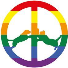 Rainbow Edition CD) Hype Williams