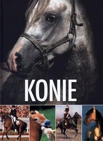 Kluszczyńskipraca zbiorowa Konie