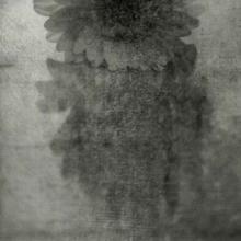 Requiem Studio Kwiaty CD) Jacaszek