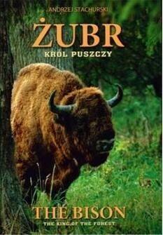 """Andrzej Stachurski Żubr """"Król puszczy"""" / The Bison """"The king of the forest""""Wersja polsko-angielska / wysyłka w 24h"""