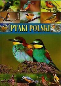 Fenix  Ptaki polski