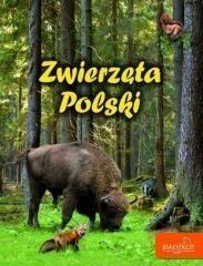 Biały Kot Zwierzęta Polski Wydanie 2015 Elżbieta Zarych Ceny I