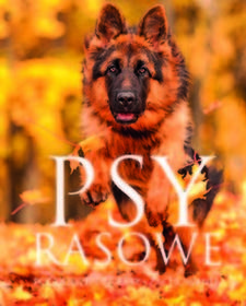 SBMIzabela Przeczek Psy rasowe