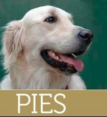 Multico praca zbiorowa Pies - wszystko o pielęgnacji, zdrowiu, żywieniu, wychowaniu i tresurze