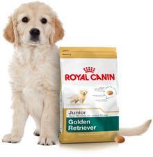 Royal Canin Golden Retriever Junior 12kg + Wiadro na karmę 51l 197060