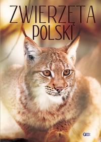 Fenix Zwierzęta Polski - fotografie, opisy, ciekawostki - Fenix