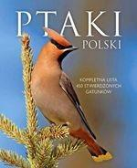 SBM Ptaki Polski - Dominik Marchowski